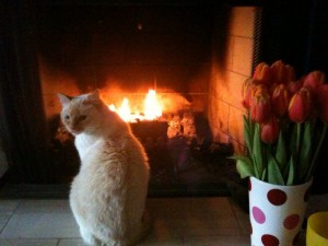 juliet and flowers by the fire